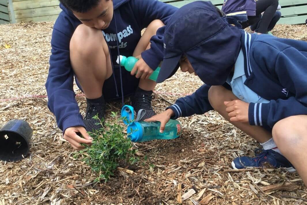 Two school boys watering seedling