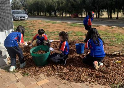 Henschke Catholic Primary School Students Mulching